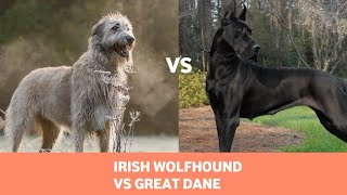 The Irish Wolfhound Vs Great Dane: Detailed Comparison