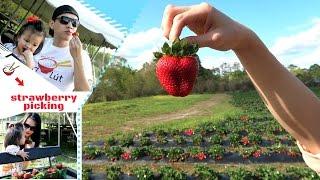đi-hi-v-bợ-du-ty-strawberry-picking