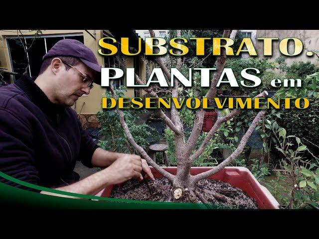 Substrato para Plantas em Desenvolvimento  - Gotas de Bonsai #10