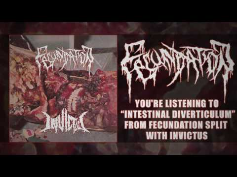 Fecundation - Intestinal Diverticulum (NEW SONG 2017)
