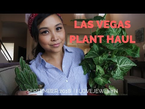 Las Vegas Plant haul | September 2018 | ILOVEJEWELYN