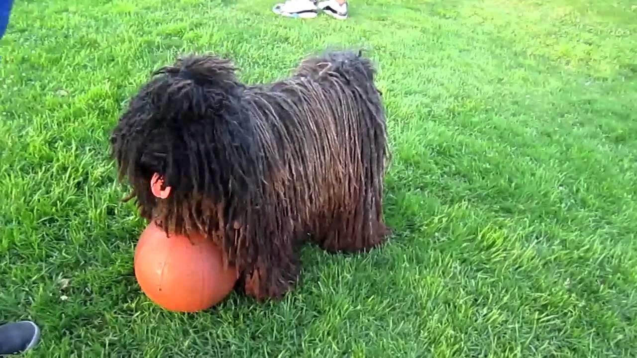 Marley Dog Name