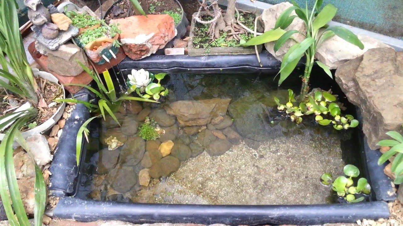 Sangha khawina dil t mizo mini garden pond youtube for Mini garden pond