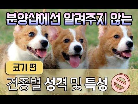 [강아지 소개] 입양 전, 반드시 알아야 하는 �