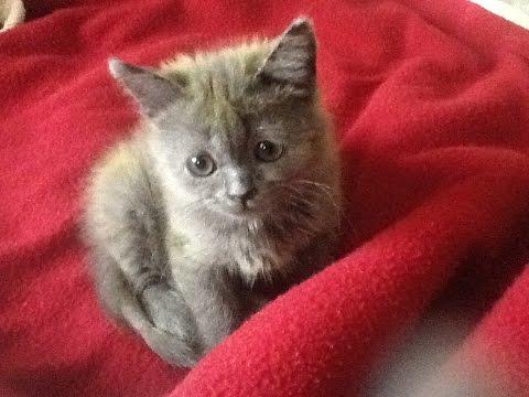 Объявления о продаже котят, кошек и котиков. Владивосток.