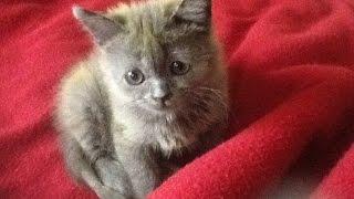 История маленького больного котенка со счастливым концом.