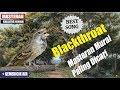 Masteran Blackthroat Paling Dicari Gemericik Air Dan Jeda Setiap 10 Menit Tembakan(.mp3 .mp4) Mp3 - Mp4 Download