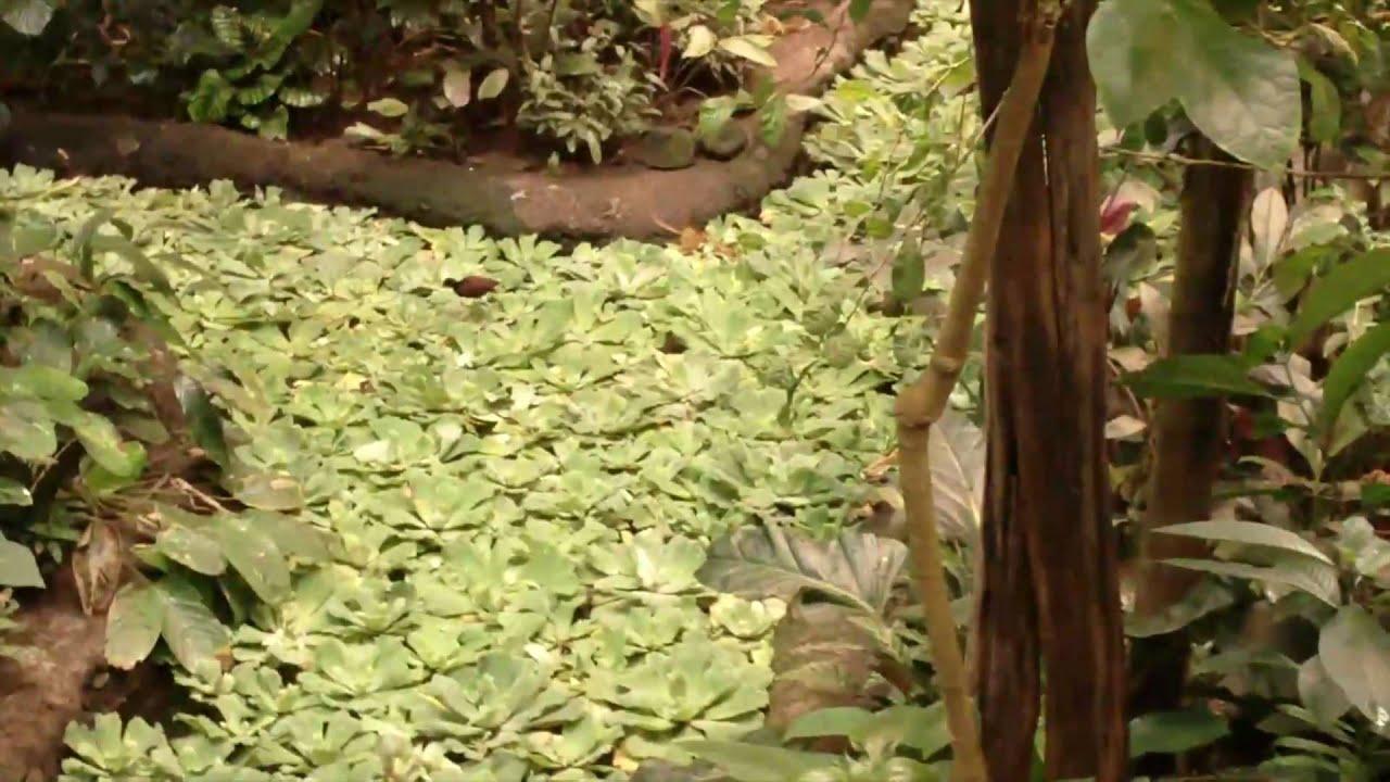 Super Animaux de la forêt tropicale - YouTube JP82