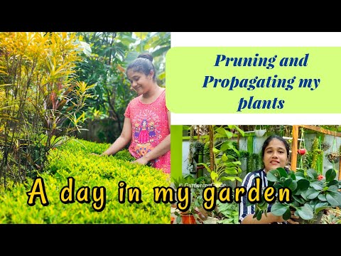 A day in my garden | Propagation and pruning tips | Malayalam