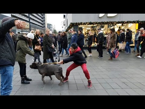10 Year Old  Boy And XL American Bully (pitbull) In Action