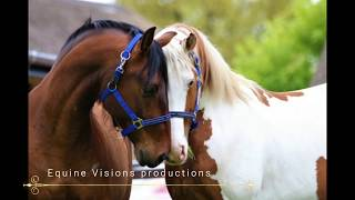 Quest of Stallions - The first encounter - Can a stallion be social without fighting?