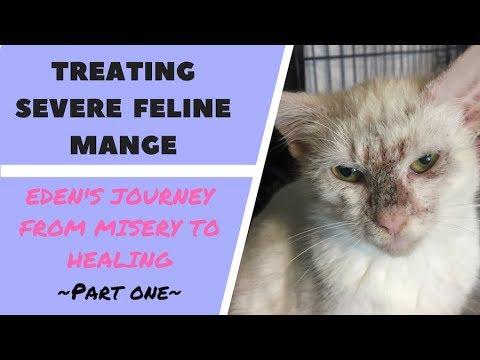 Eden the kitten has SEVERE mange, but Kitten School is here to help! Part 1