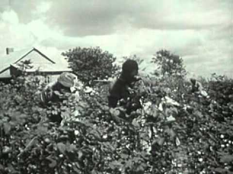 Plantation System In Southern Life (1950) - YouTube