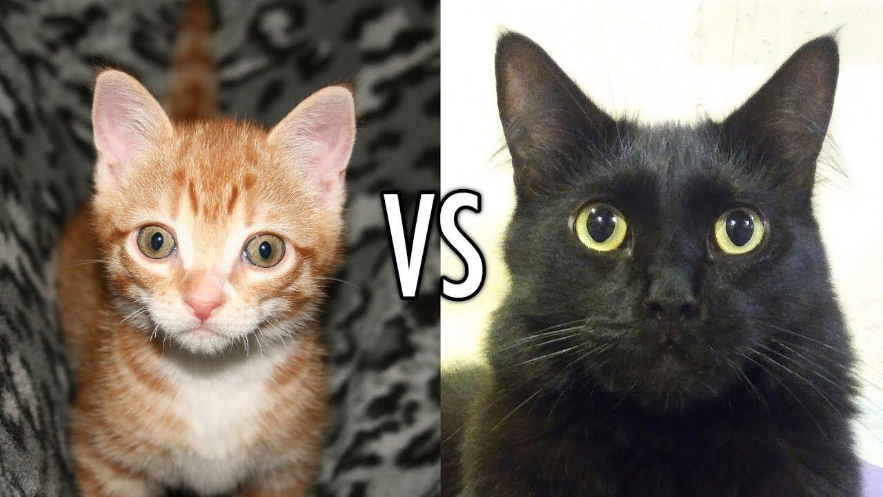 Brutal Fight Cat Vs Dog Youtube