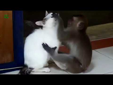 Cats Dogs Monkeys So Funny Animals Compilation Enjoy Video Dailymotion