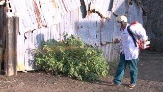 Tin Tức 24h Mới Nhất Hôm Nay : Nguy cơ tái bùng phát dịch bệnh trên gia súc, gia cầm tại Cà Mau