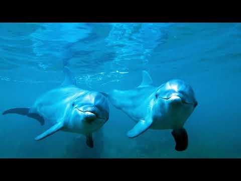 Расслабляющие звуки дельфинов