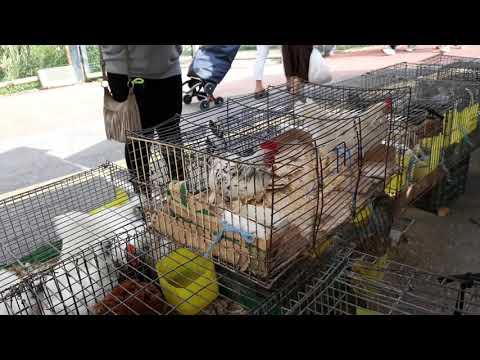 mercado-de-aves-en-tordera