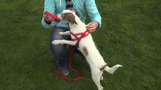 PSY – Spacer z małym psem