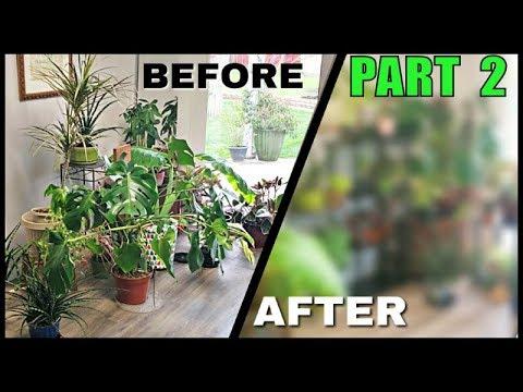 Indoor Plant Reorganization Hacks + Cleaning My Room [PART 2]
