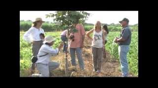 SIEMBRA Y COSECHA TV: Finca de nogal de pecán