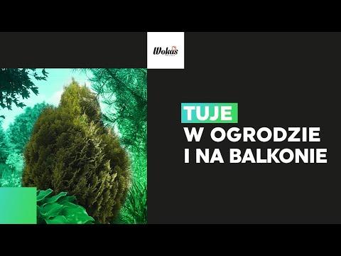 Download TUJE w ogrodzie – wszystko, co musisz wiedzieć   Zielona Szkoła WOKAS #11