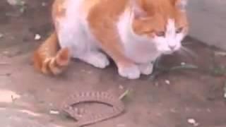 Кошка против змеи