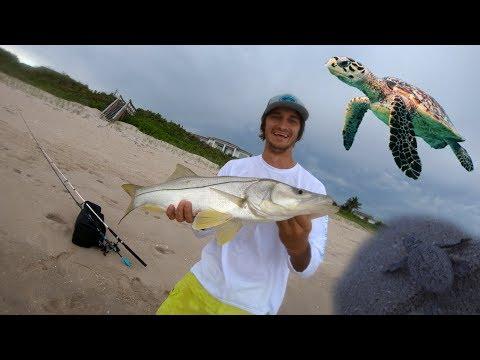 Vero Beach Shore Snook Fishing & Baby Sea Turtles