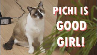 Pichi is making friends