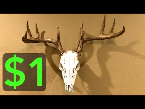 $1 DIY Deer Skull Mount!!