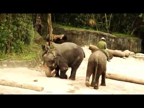 Video Lucu Pertunjukan Gajah Yang Menggemaskan Di Kebun Binatang Singapura