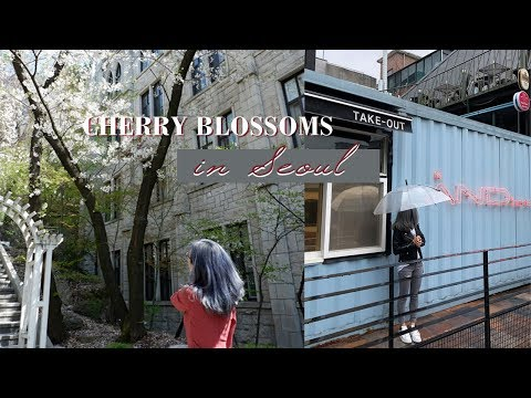 CHERRY BLOSSOMS in SEOUL  |  Things to do in Seoul - Korea Travel Guide
