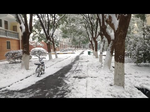 first snow fall of the year 2019 in china wuhan hust uni turn white frome green 中国第一场降雪