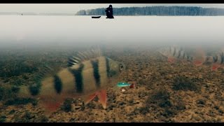 Ловля Окуня Зимой на Балансир | Зимняя рыбалка 2017(Очередной выезд на рыбалку 2017 за окунем. Подводные съемки работы балансира. Рыбалка проходит в Подмосковье...., 2017-01-05T13:54:27.000Z)