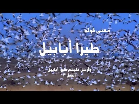 طيرا أبابيل معنى كلمة أبابيل فى قوله تعالى وأرسل عليهم طيرا أبابيل الفيل 3 Youtube