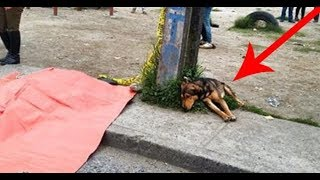 Dog Sat On The Road Beside A Pink Tarpaulin  When They Learned Why I Cried
