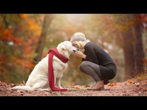 Dog's viral videos| Cute Dogs| Life Videos| Dogs are our real best friend