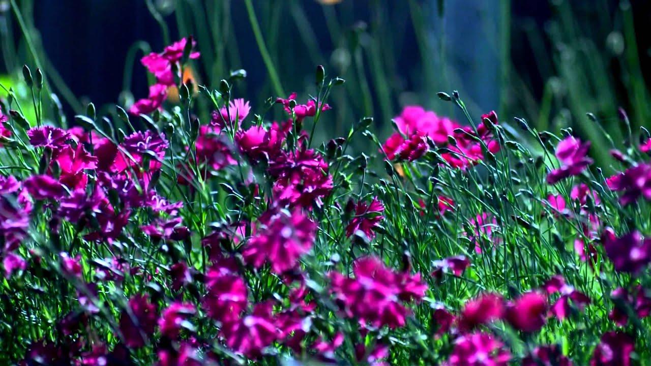 Eine Schöne Blumenwiese Youtube