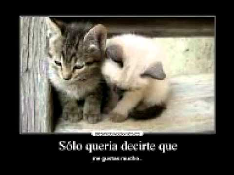 Gatos Con Frases Bonitas Youtube
