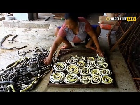 7-kampung-ular-terbesar-di-dunia,-penduduknya-beternak-ular-seperti-halnya-ternak-ayam