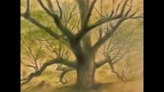 La storia di Elzéard Bouffier, l'uomo che piantava gli alberi