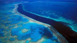Жизнь на Австралийском барьерном рифе! Документальные фильмы