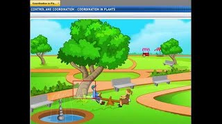 CBSE Class 10 Science, Control and Coordination -3, Coordination in Plants