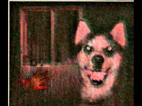 """Smile.dog"" 