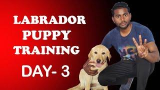 Labrador Puppy Training  Day 3   Train Your Puppy Sit & Shake Hand in Hindi   ALEXA THE LABRADOR