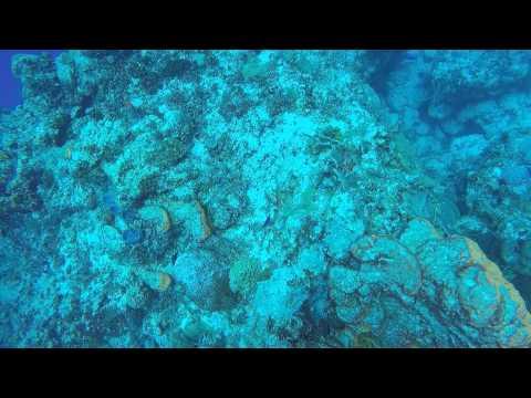 POV Diving - Santa Rosa - Cozumel - Mexico