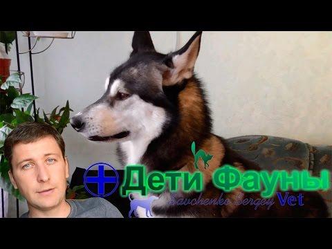 Какую собаку завести? Какая порода лучше?
