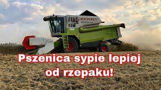 #239- Żniwa 2019- Pierwszy wyjazd w pszenicę! + mała awaria.. &Claas Medion 310&
