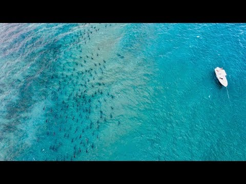 THOUSANDS OF SHARKS OFF FLORIDA COAST!!! (the Annual Blacktip Migration)