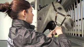 Présentation camion chevaux poids lourd Stephex STX par AllRoad Concept